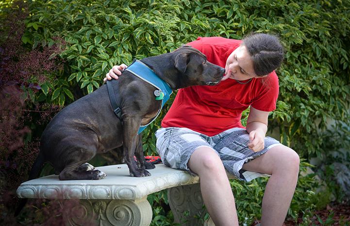Geneva, the black Labrador retriever and pit-bull-terrier mix, met a kindred spirit