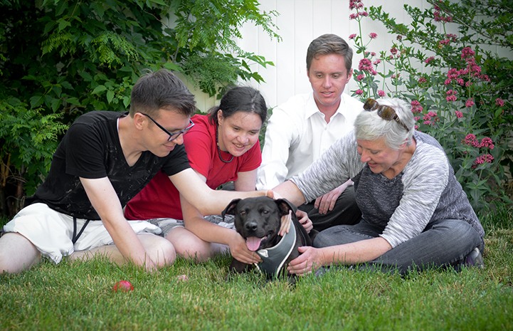 Geneva, the black Labrador retriever and pit-bull-terrier mix, with her new family
