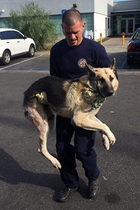 Samson the German shepherd had to be carried out