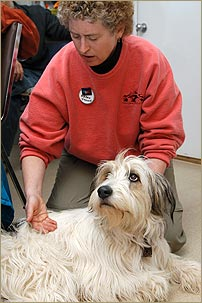 Karen Rasmussen demonstrating Tellington TTouch method with a dog