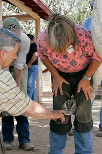 Farrier examining a horse's foot