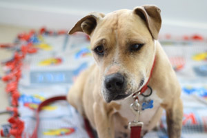 Ellen the Vicktory dog who was rescued from Michael Vick's fighting ring was loved by all who met her