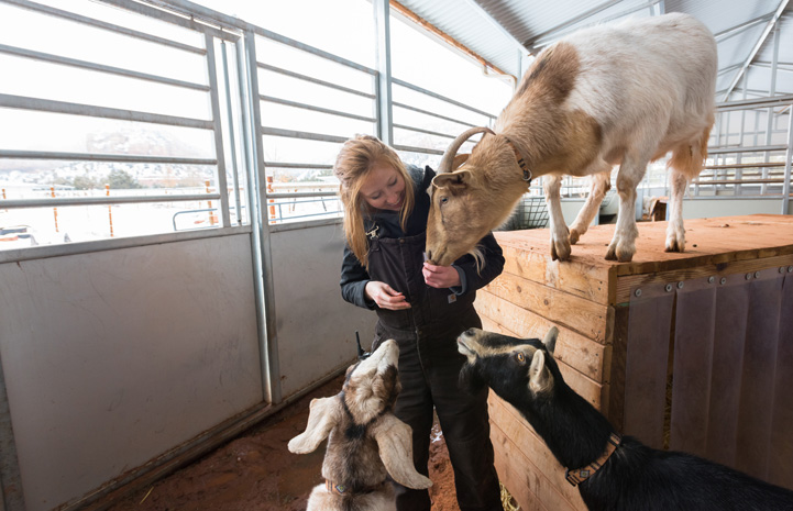 An internship at Best Friends was a perfect mix for Katie, who's majoring in animal sciences. She is seen here interacting with a goat.