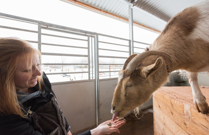 Katie gained skills, experience and memories from her Best Friends internship. Here she is feeding a goat.