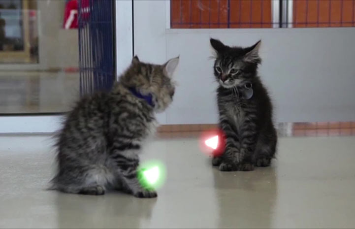 Jedi kittens with light saber tails