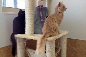Jordy and Makana enjoying the view from a cat tower
