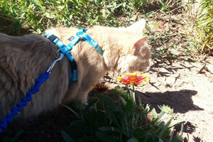 Jordy now loves walking around in the brush, chasing butterflies and other small animals, burning off some energy and taking in fresh air