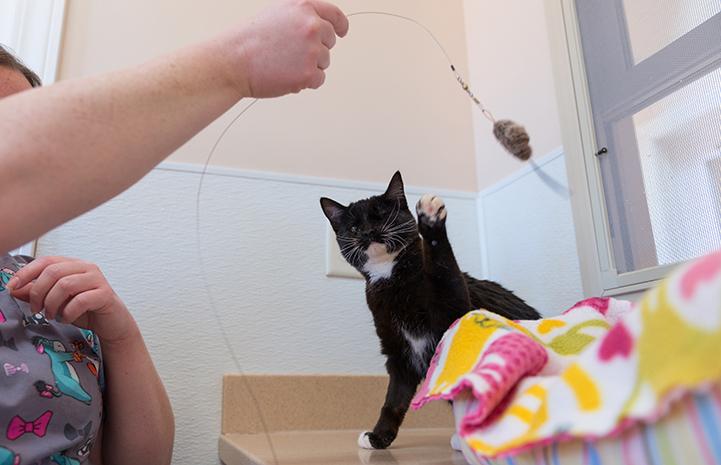 Playtime for Beatrice the kitten