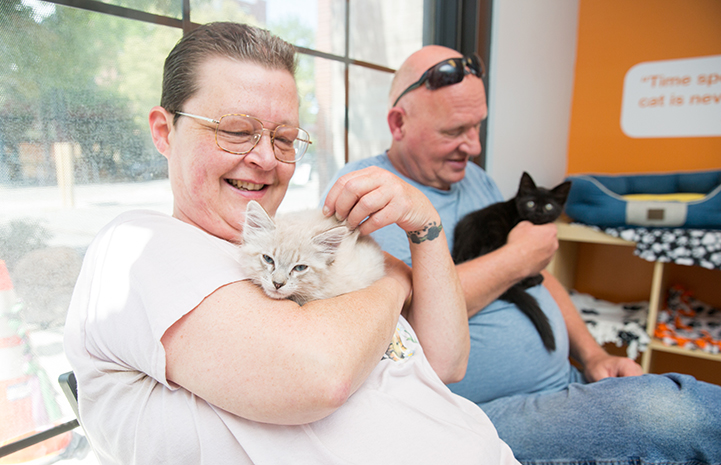 Porcelain the kitten being adopted
