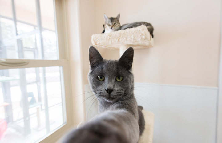 Zinc is like a big brother to kittens at the sanctuary