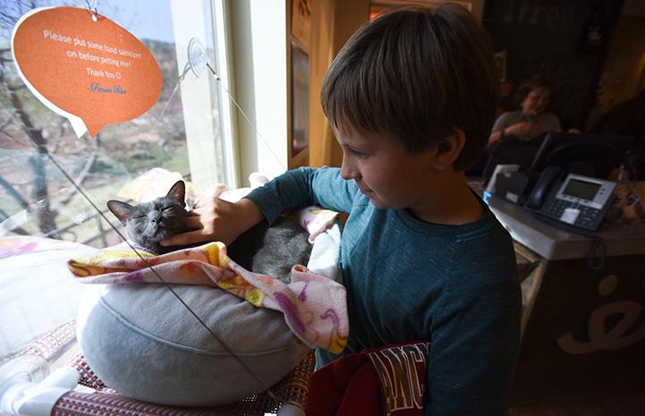 Princess Blue the Korat cat makes a new friend