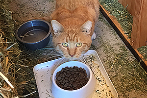Pumpkin, a working cat from the Pet Adoption and Spay/Neuter Center in Los Angeles, takes a break from patrolling the ranch