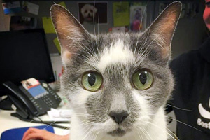 Emerald the cat with green eyes found a home