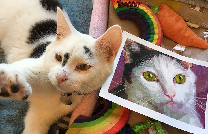 Cookie the cat with picture of Noah the cat