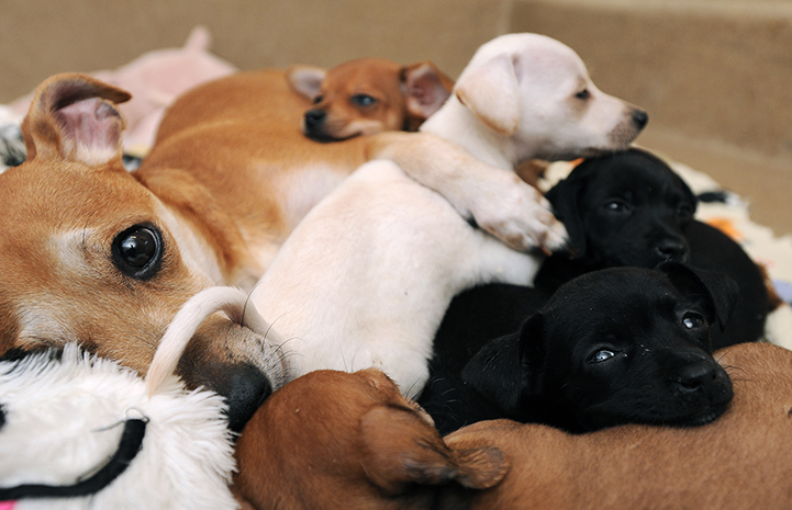Mama dog with her litter of puppies