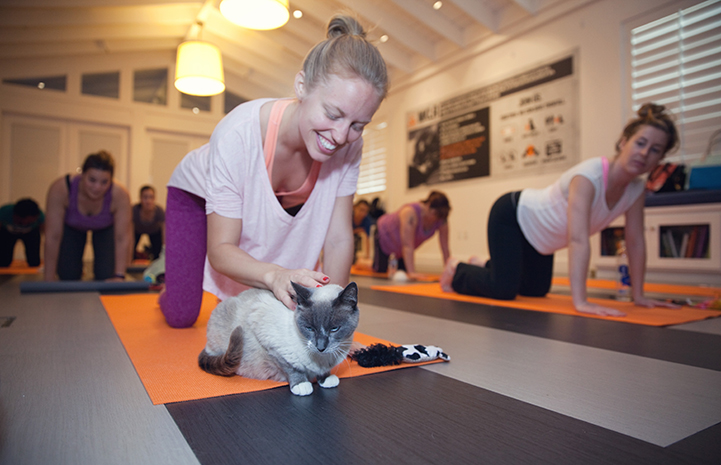 Woman petting a cat during yoga class