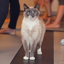 Kitty Yoga Masters