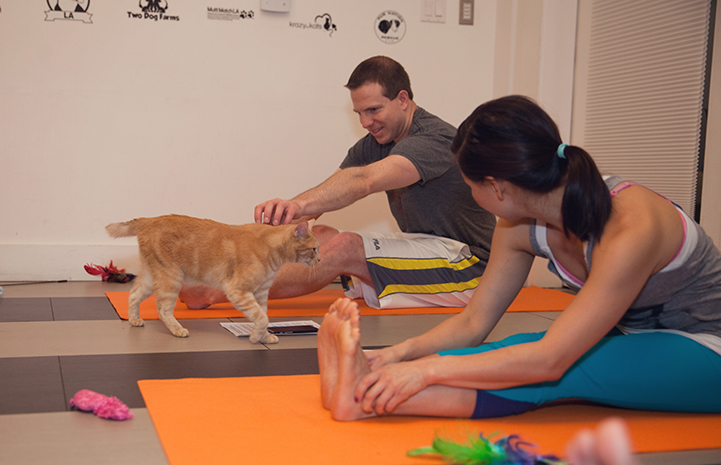 Man doing yoga stretching to pet a cat