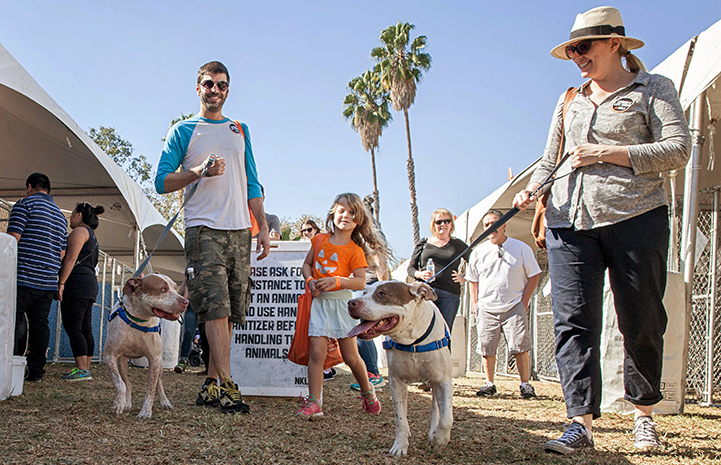 Mia and Bailey Bear the pit bull terriers going for a walk at the NKLA Super Adoption event