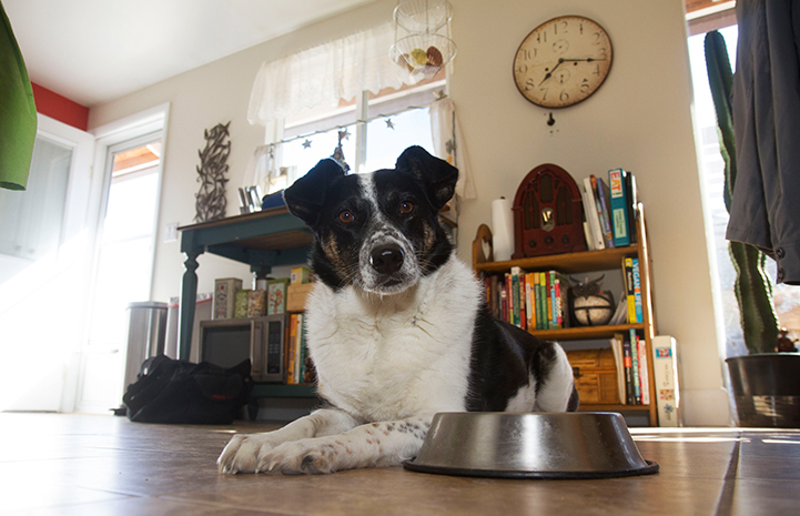 Dog next to an empty food bowl with a clock behind him