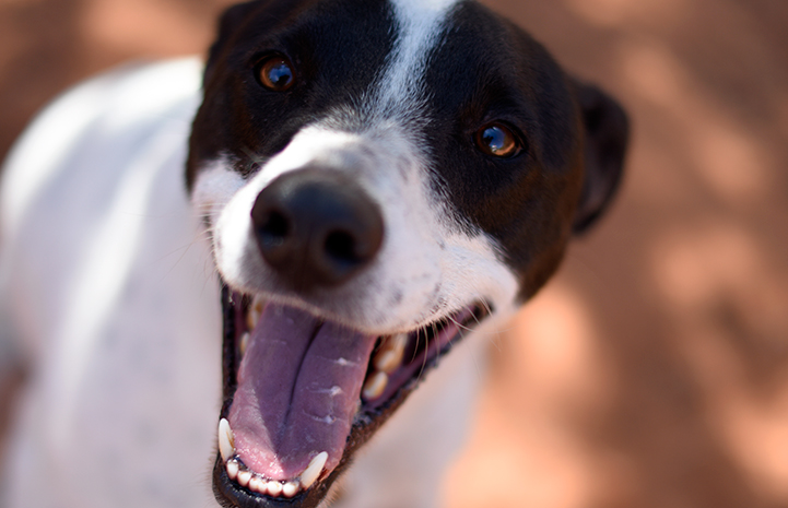 Monaco the dog is available for adoption