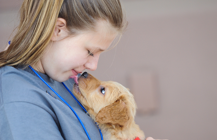 Puppy giving a little girl kisses