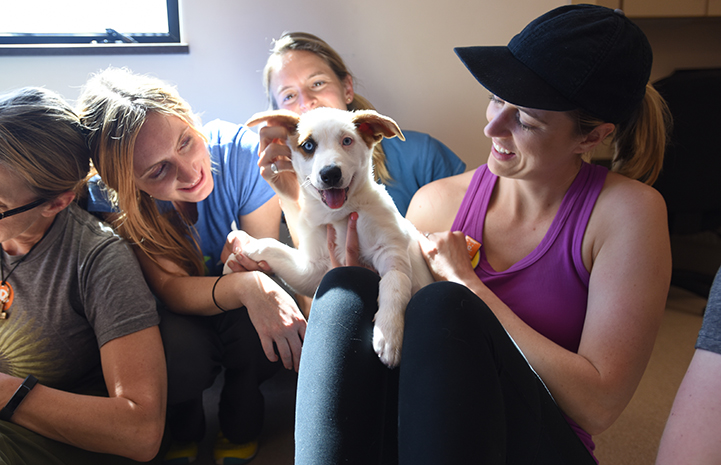 Puppy being held and loved on by group of women