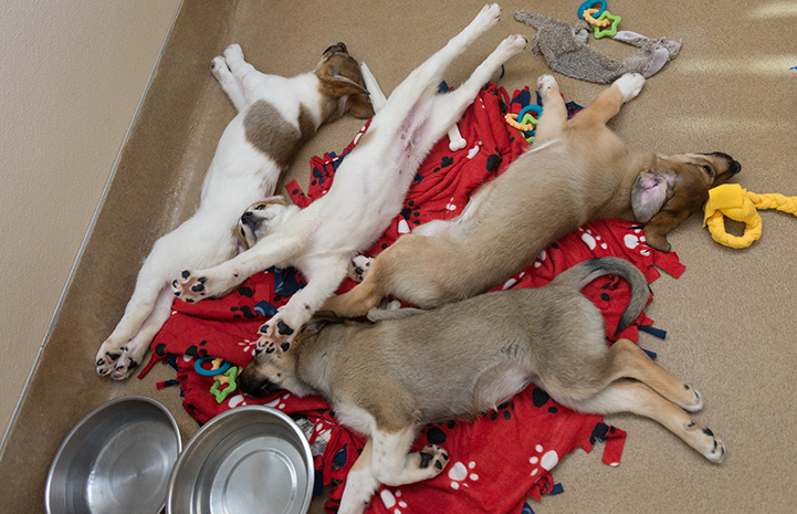 Group of puppies sleeping