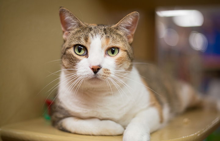 Violet the cat in New York