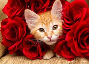 Orange tabby kitten in red roses