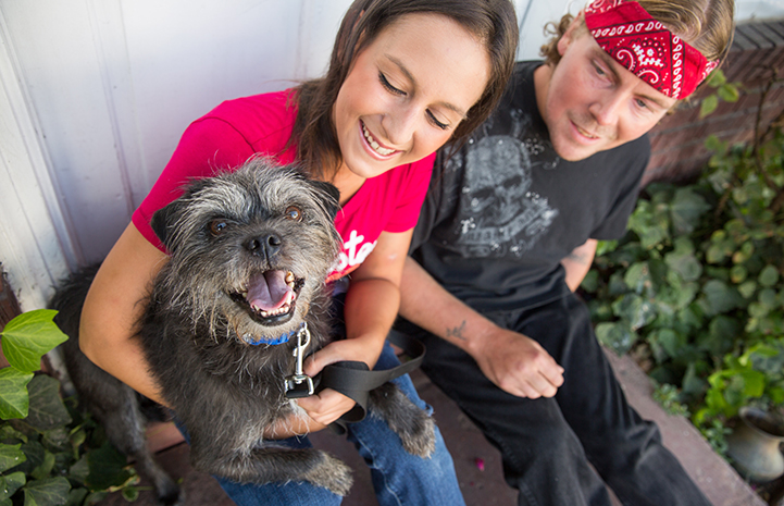 Waylon the terrier mix after being adopted by Gavin Gloyne and his wife Kristina