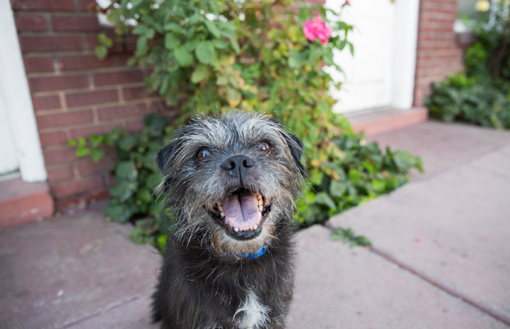 Waylon the terrier mix was adopted thanks to the Pets for Vets promotion
