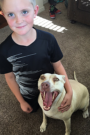 Pearl the pit bull terrier, a former fighting dog, with the boy Hayen
