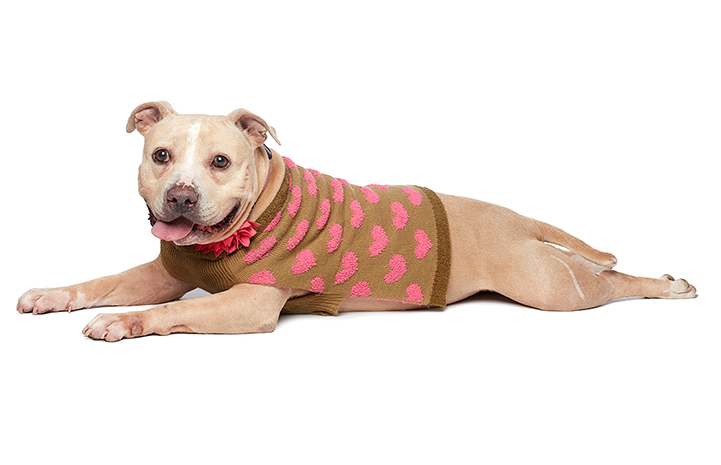 Roomba looking beautiful in her heart-covered sweater