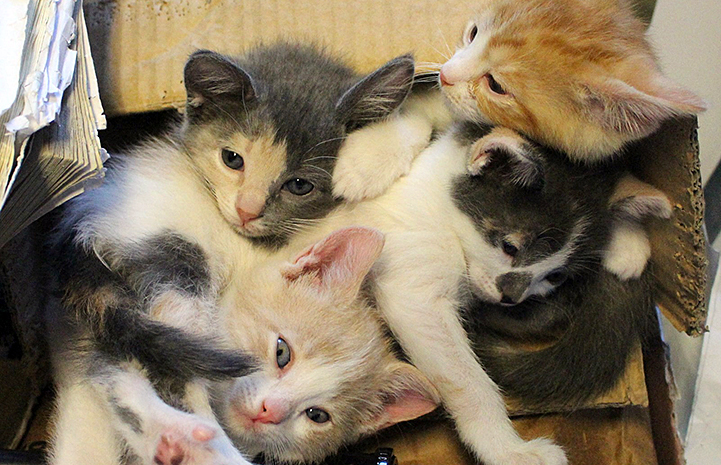 Kittens helped thanks to the  Women Inmate Social Kitty Retreat (WISKR) program