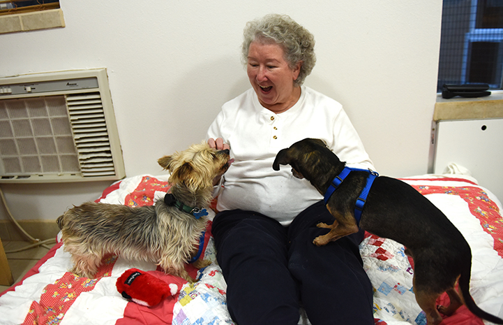 Yorkshire terrier Samantha who was rescued from a puppy mill is getting more and more comfortable with Cathy Calure