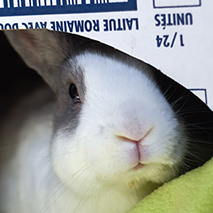Rabbit Day