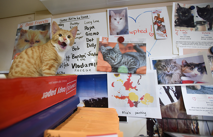 Wally the kitten playing in the Hope House Clinic