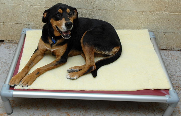 Karma the dog on a Kuranda bed