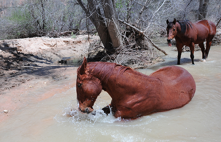 Animal pictures of summer fun: horses playing in creek