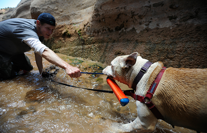 Animal pictures of summer fun: playing tug 'o war with a dog in a creek