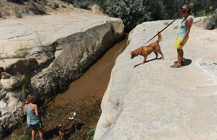 Animal pictures of summer fun: dogs going on hike to the creek
