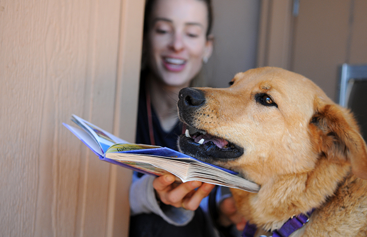 Animal pictures of summer fun: reading to a dog