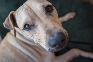 Scratch still sports the scars from his time before he was rescued following Hurricane Katrina