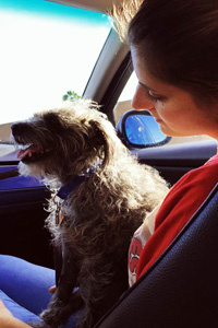 Presley the arthritic dog on her ride home after being adopted