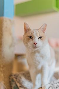 Surya the 16-year-old senior cat