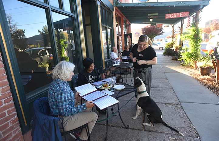 Braxton the senior dog on an outing to downtown Kanab practicing his doggie manners
