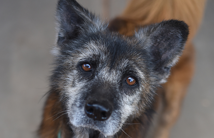 Forte is the senior dog available for adoption