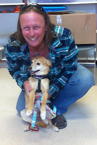 ChiChi, the senior shiba inu mix, now has a loving family