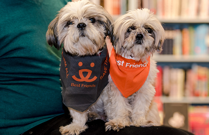 Sunny and Moon, two senior shih tzus, find the perfect home together